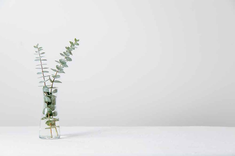 Fern-in-vase-in-front-of-white-background-by-Tim-Chow-on-Unsplash