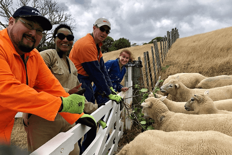 Risk-and-Compliance-team-and-sheep